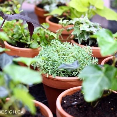 Choosing Plants for Our DIY Vertical Garden