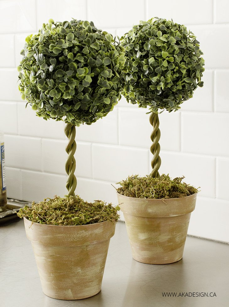 How To Do Topiary A Beginners Guide