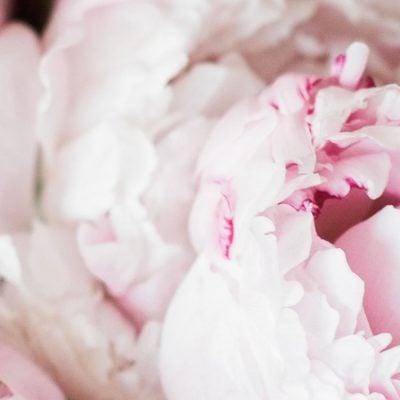 Feminine WordPress Blog Themes – The Ultimate List