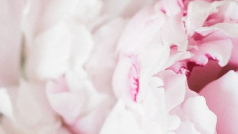 Feminine WordPress Blog Themes – The Ultimate List