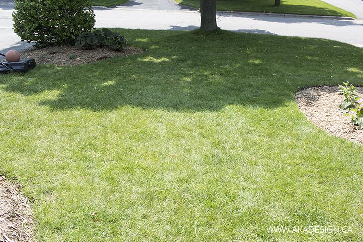 aka design front yard grass