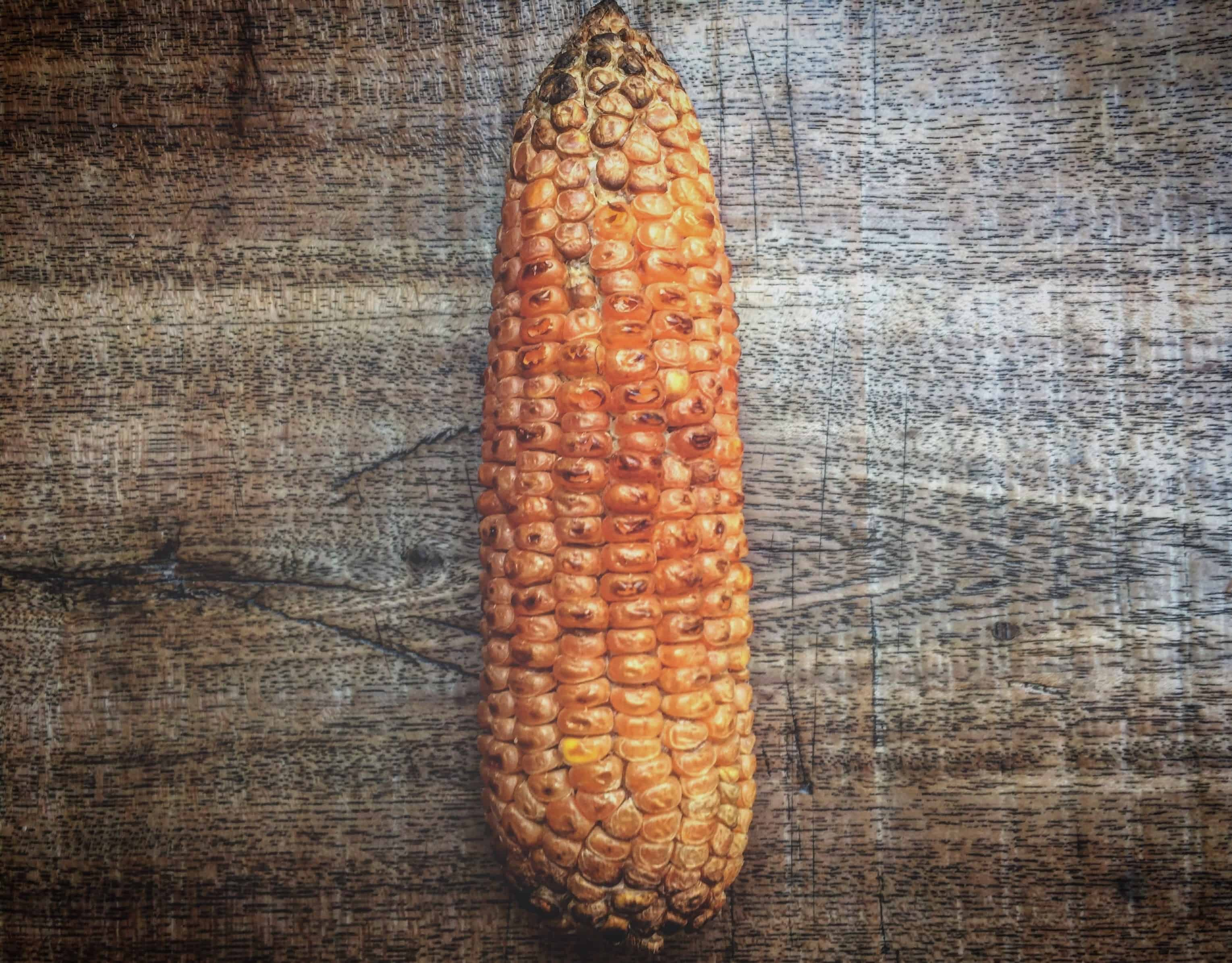 corn on the cob on wood table