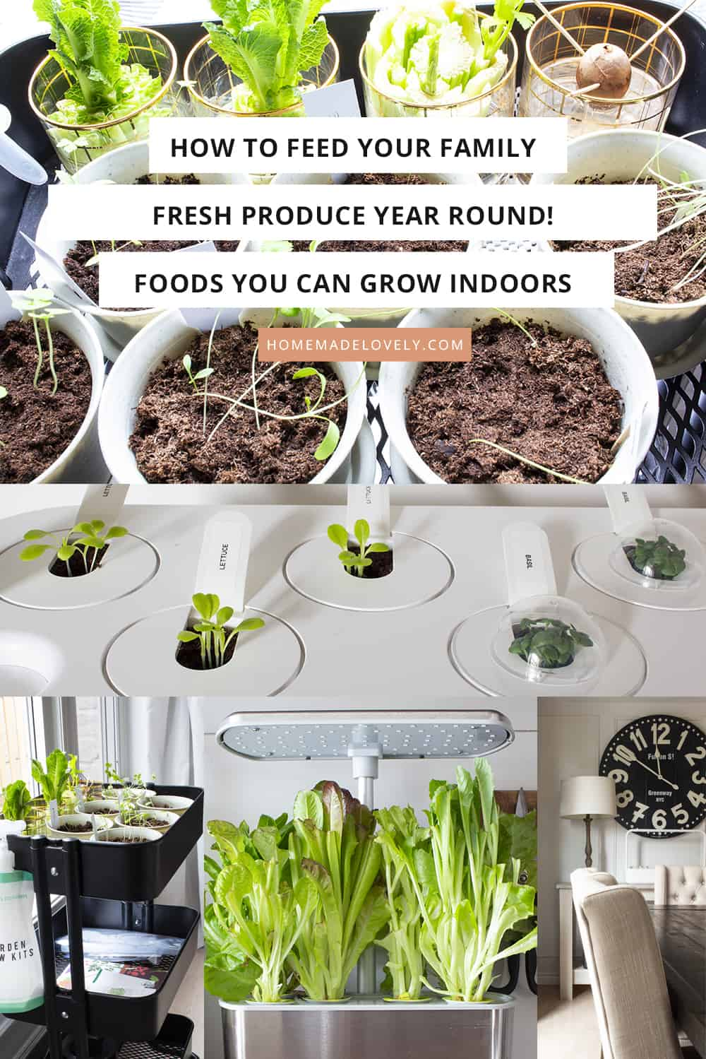 How to Grow Food Indoors on text overlay over indoor food plant photos
